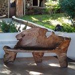 Dal tronco di un ulivo un comodo divanetto