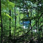 Treed pathways