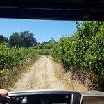 Private tour at Aonair through the vinyards