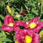 The Lily Barn Gardenの写真
