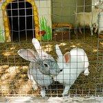 Cute rabbits :)