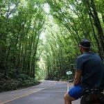 Bild från Mahogany Forest