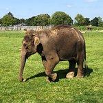 Фотография ZSL Whipsnade Zoo