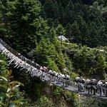 Pony crossing bridge
