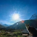 cat enjoying sun bath