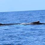 Foto de Naturalist Science & Tourism