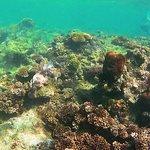 ภาพถ่ายของ Evolution Fiji
