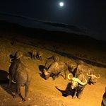 Valokuva: F. King Tours and Safaris - Day Tours