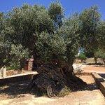 صورة فوتوغرافية لـ Olive Tree Museum of Vouves
