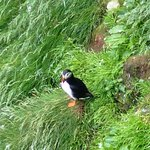 A puffin next to the lighthouse!