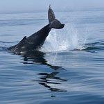 Foto de Capt Bill & Sons Whale Watch