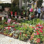 Photo of Plaza de Las Flores