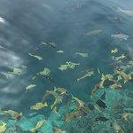 Bilde fra Biyadhoo Island Resort
