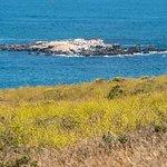 Bodega Rocks has barking seals