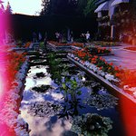Фотография The Butchart Gardens