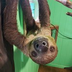 Sloth & Friends Encounter