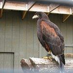Foto de Ohio Bird Sanctuary