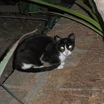one of the small and cute greek cats