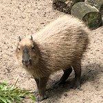 Foto de Parc Zoologique de Maubeuge