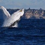 Whale breaking