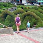 Bilde fra Costa Rica's Senor Scissorhands Topiary