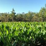 Foto Corkscrew Swamp Sanctuary