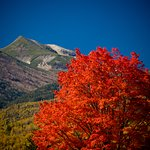 Ichinose Meadows great maple offers some amazing fall colors