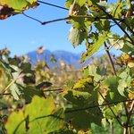 Wine Flies Wine Tours - Day Tours照片