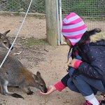 Foto di Halls Gap Zoo