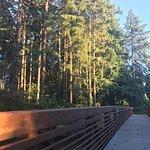 The new bridge at the park.