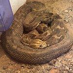 Victoria Falls Snake Park张图片