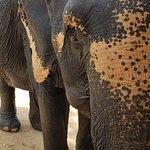 Bilde fra Elephant Jungle Sanctuary Phuket