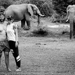 Our visits from the elephants at the swimming pool make a memorable stay.