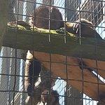 Newquay Zoo resmi