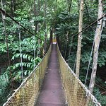 the rope bridge for visitors