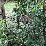 Macaques resting on a rope
