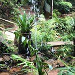 fountains and waterfalls along the jungle trail