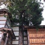 大きなマキの木がシンボル