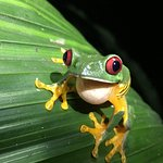 Foto de Greentique Costa Rica Tours