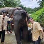 Elephant Nature Park Foto