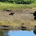 We were so excited to spot a mama bear and her cub.