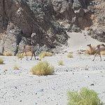 Wadi Gemal의 사진