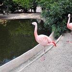 Зоопарк. Парк Оранжри. Страсбург.