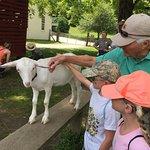 Petting kid (baby goat) at the barn