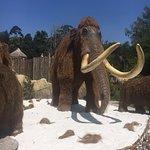 Foto de West Midland Safari Park