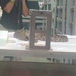 Reptile Discovery Center张图片