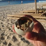 """Balut"" a local exotic food"