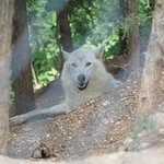 Foto di Lee G. Simmons Conservation Park and Wildlife Safari