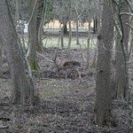 Famigliole di cervi