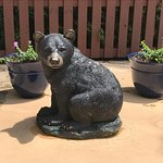 A little bear watches you swim :)